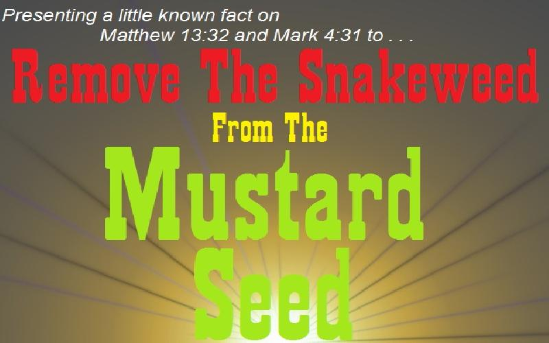 Remove The Snakeweed From The Mustard Seed