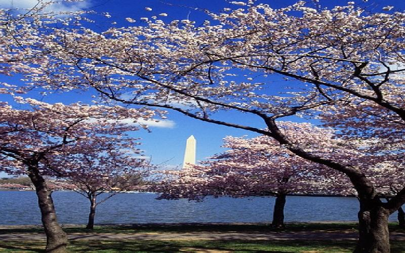 Top Family Activities and Attractions in Washington DC