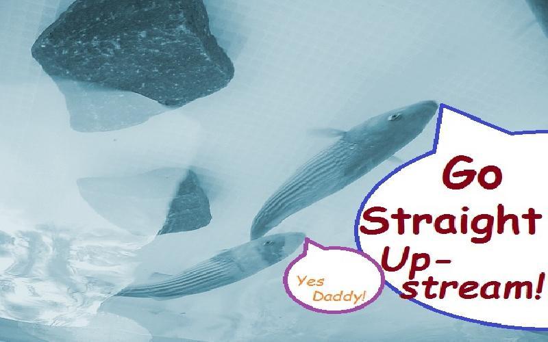 Go Straight Upstream