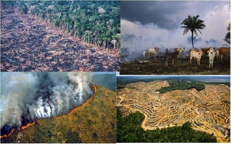 How Human Activities Affects the Destruction of Rainforest