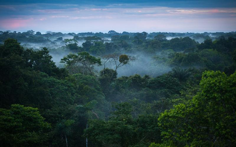The Importance of a Forest Ecosystem