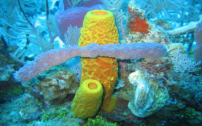 Why do Sponge Belongs to the Animal Kingdom