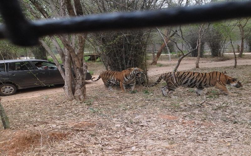 Bannerghatta National Park Information and Guide
