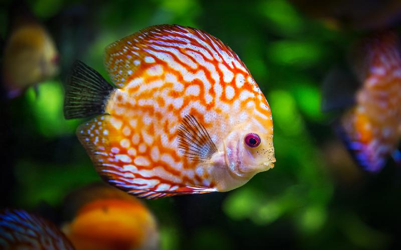 Why Reception areas in Clinics, Offices and Hospitals have Fish aquariums