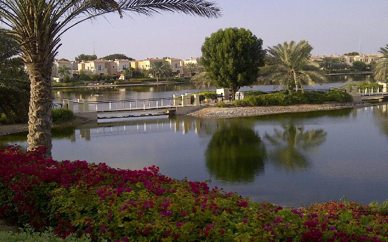 The Desert is made to Bloom in Abu Dhabi with Flowers and Gardens