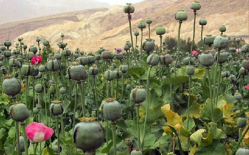 What can be done to Reduce Illicit Drug Production in Places like Bolivia and Afghanistan?