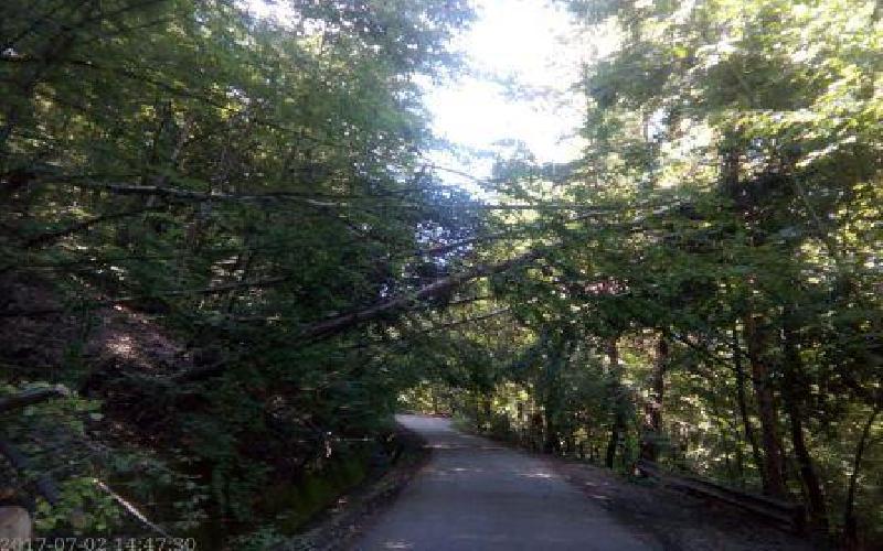 Falling Trees- Victims of Heavy Rainfall