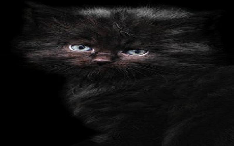 Six Stunning Cat Breeds