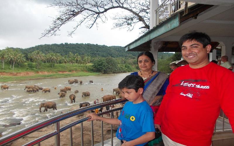 The Pinnawela Elephant orphanage in Sri Lanka is a sensation.