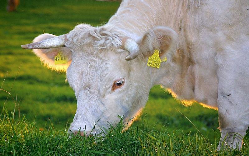 Is Organic Milk Healthier than Regular Milk