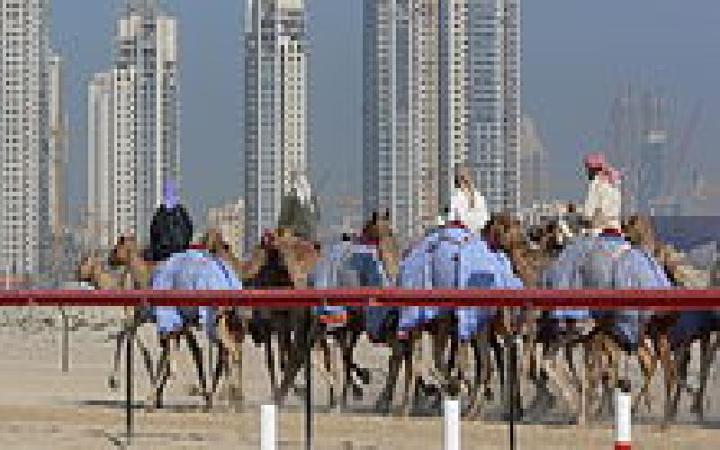 Camel Racing is a big sport in Dubai and Abu Dhabi
