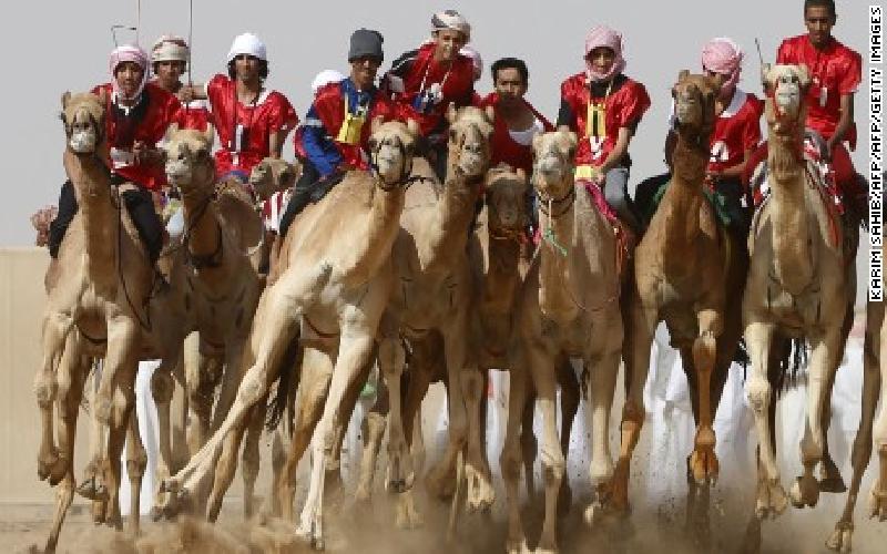 Camel Racing is Big Money in the UAE