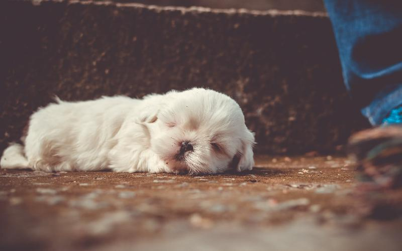 5 Most Important Things to Consider Before Getting a Puppy