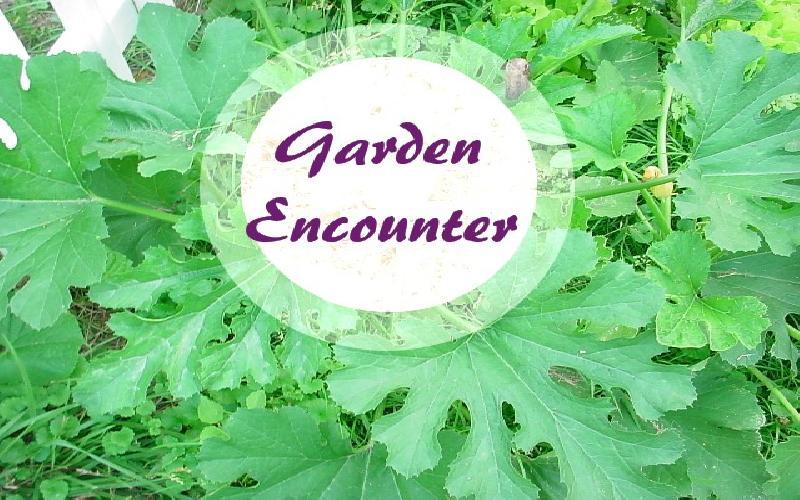 Garden Encounter
