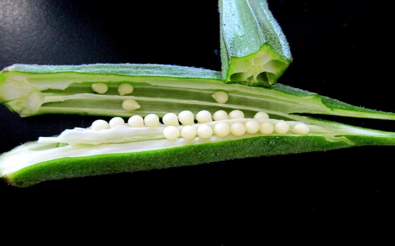 15 Amazing Health Benefits of Okra ( Lady's Finger ) and Its Nutritional Value